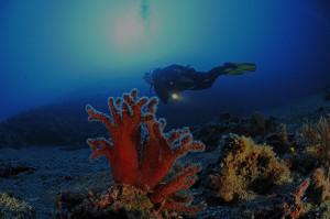 BG-DivingSpots